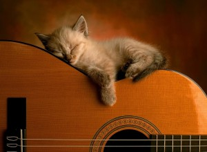 Cat-Sleeping-on-Guitar