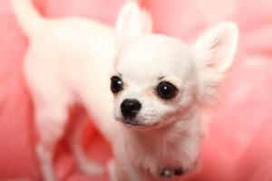 小型犬寒さ対策1