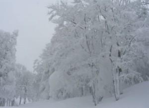 蔵王樹氷4