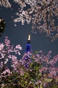 東京お花見デート5