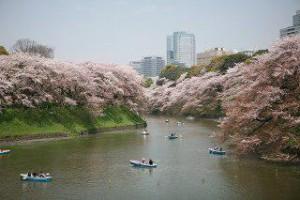 東京お花見デート3