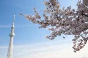 東京お花見6