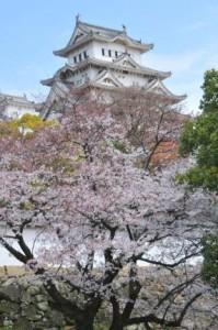 関西桜名所4