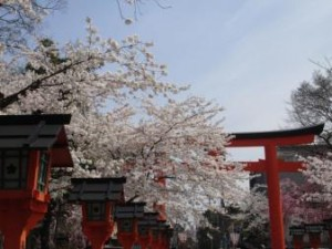 関西桜名所2