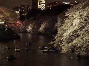 関東桜10