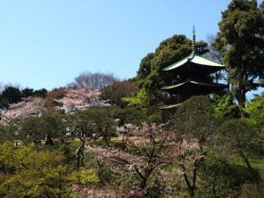 東京お花見デート7