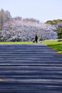東京お花見デート2