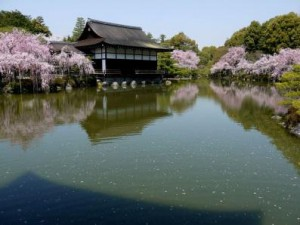 関西桜名所5