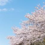 この春に絶対観たい!関西の桜の名所10選