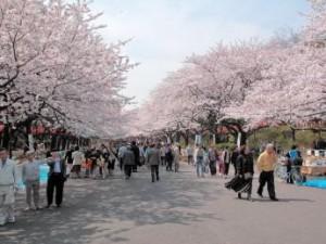 東京お花見3