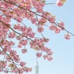 春の東京デートはどこがオススメ?初デートカップル必見!