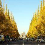 東京で秋のデートを楽しむなら?おすすめ秋スポット情報まとめ!