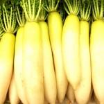 大根の正しい保存方法は?冷蔵と常温どっちがいいの?