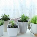 寒さに強い観葉植物特集!枯れにくくて育てやすい観葉植物は?