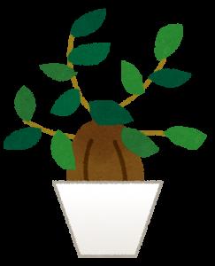 plant_gajumaru